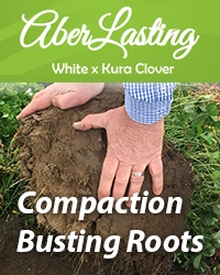 AberLasting – Compaction-Busting-Roots