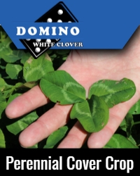 Domino Perennial Cover Crop