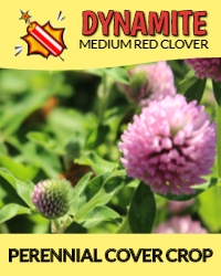 Dynamite Perennial Cover Crop