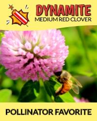 Dynamite Pollinator Fav