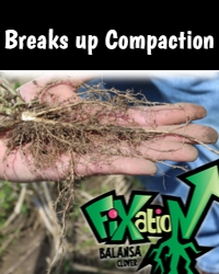 Fixation Compaction