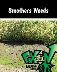Fixation Smothers Weeds