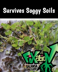 Fixation Soggy Soils