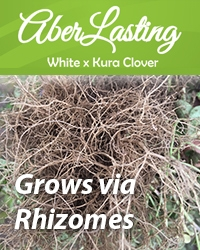 AberLasting – Grows-via-Rhizomes