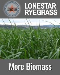 Lonestar Biomass