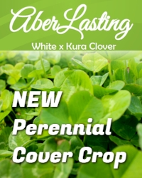 New Perennial Cover Crop
