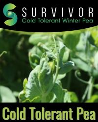 Survivor Cold Tolerance