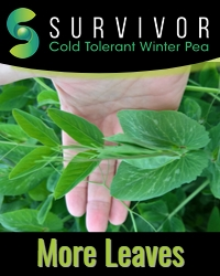 Survivor More Leaves