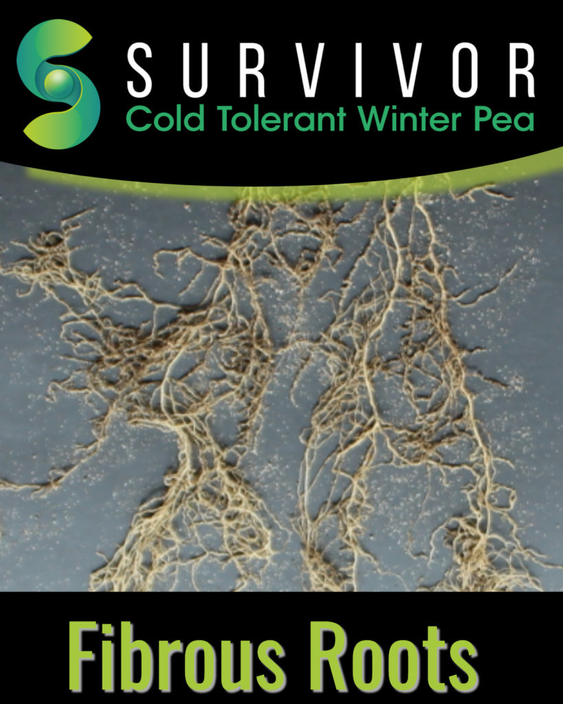 Survivor Roots