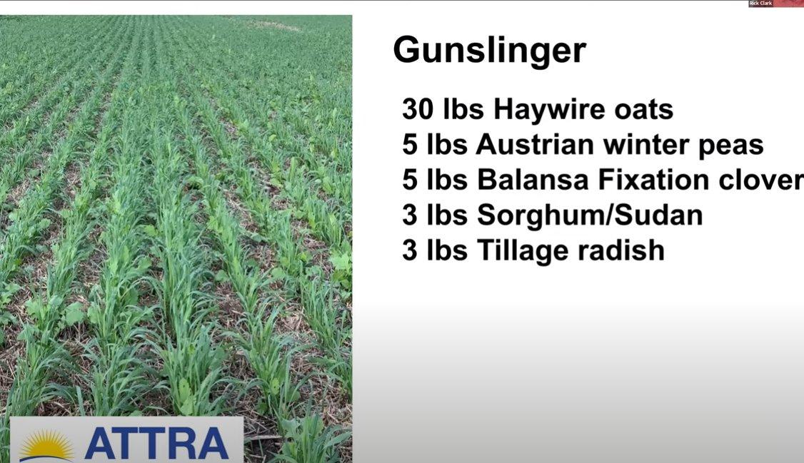 gunslinger cover crop