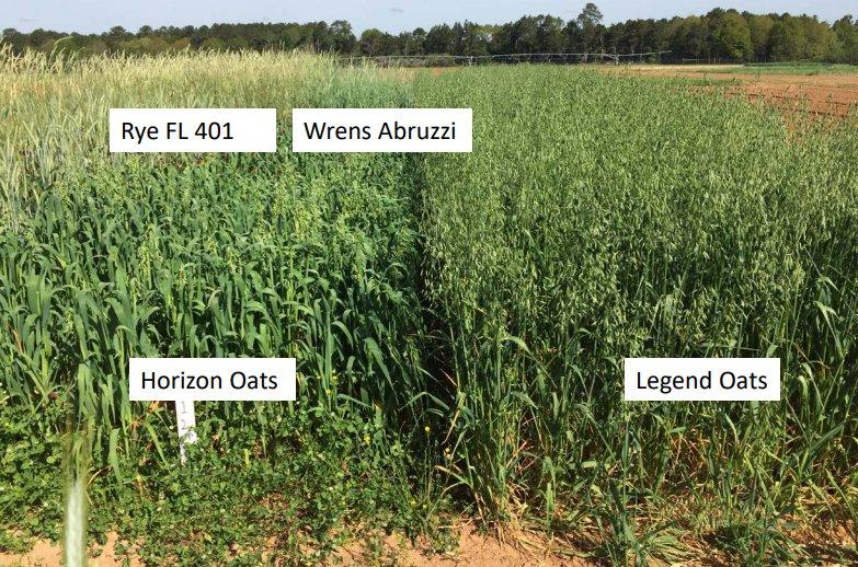 choosing cover crop varieties and mixtures