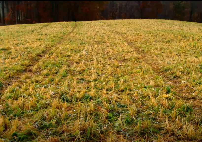 Session 2: IKW Cover Crop Webinar, January 27, 2021